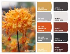 ColorSnap by Sherwin-Williams – ColorSnap by Karol W.