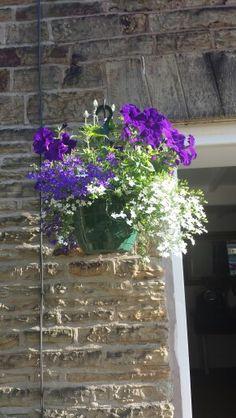 Cottage garden  hanging basket