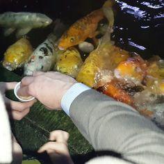 Karmienie ryb w @palmiarniapoznanska  #karp #koi #carp #fish #ryba #palmiarnia #polska #poznań #poland #poznan #kakaludek #dzieci #dziecko #familyfun #fun #family #atrakcje