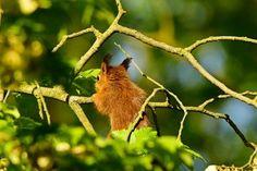 'Eichhörnchen' von toeffelshop bei artflakes.com als Poster oder Kunstdruck $17.33