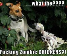 zombie dog this made me laugh so hard