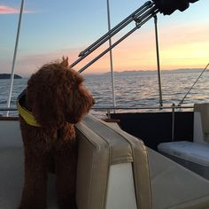"""#sunsets over the #pacific # #westmarine #dogdaysofsummer #deepthinker #contemplative ------------------------------------------------------ #doodlelife…"""