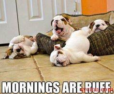 Mornings Are Ruff