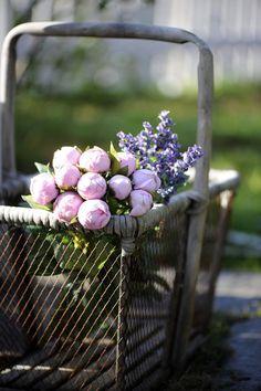 Love this garden basket