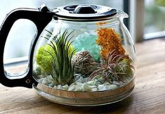 Anything can be a terrarium if you try hard enough! Repurpose a coffee pot into a succulent terrarium, upcycle crafts, DIY garden decor idea. Mini Terrarium, Glass Terrarium, Terrarium Table, Terrarium Ideas, Succulent Terrarium, Old Kitchen, Kitchen Items, Kitchen Stuff, Hydroponic Gardening