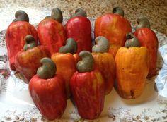 Fruta de temporada.