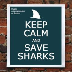 Keep calm and save sharks #keepcalm