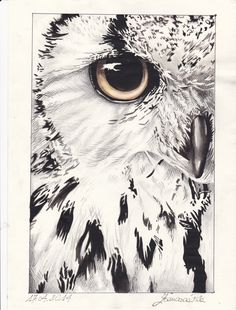 owl - tecnica mista https://www.facebook.com/Francesca-Piva-1518741268452199/