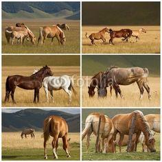 Collage di cavalli in libertà - Free horses © Pietro D'Antonio
