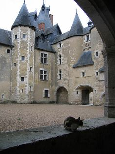 Cat and castle, near Blois France