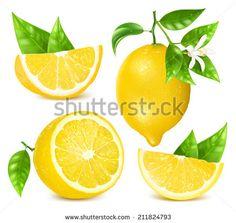 Limones Ilustraciones en stock y Dibujos | Shutterstock