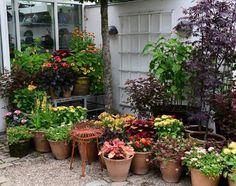 From my own garden ... #blomster #flowers #garden #clausdalby