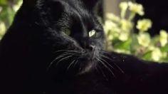 BBC Horizon - Secret Life of the Cat