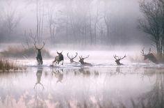 Natuurfotografie - GeMi Tekst & Beeld