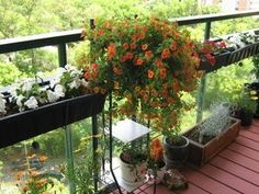Ideas for gardening in the balcony