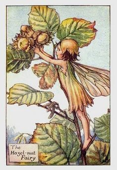 Hazel-nut Fairy by Cicely Mary Barker