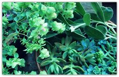 """Origanum """"Kent Beauty"""" and succulent cuttings were frequently used in the arrangements."""