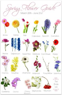 Spring Flower Guide Are you planning a spring wedding? If so, this spring flower guide is a must have!