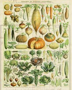 Botanical Print Potagere 1