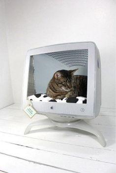 Recycler un écran d'ordinateur, pour son chat !