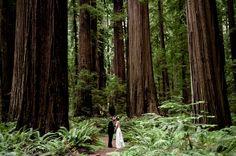 Omg looovvveeee! #redwoods