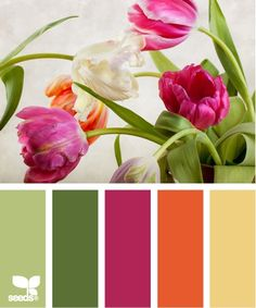 From Design Seeds-tulip color