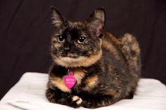 Betty Cat | Pawshake Winchester