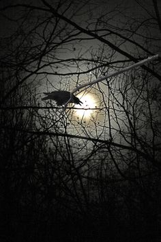 Raven in a dark forest with a moon that hardly lit up. Wallpeper Tumblr, Quoth The Raven, Raven Art, Crow Art, Crows Ravens, Oeuvre D'art, Night Skies, Dark Art, Paranormal