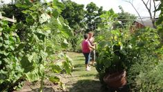 Sustainable Agriculture and Gardening Made Simple