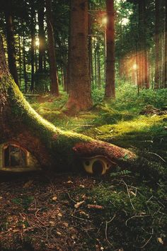 Can you imagine a little kid coming across this? KLF Tree House, The Enchanted Wood photo via ilaurens Fairy Garden Houses, Gnome Garden, Fairy Gardens, Fairy Tree Houses, Tree Garden, Fruit Garden, Enchanted Wood, Enchanted Garden, The Enchanted Forest
