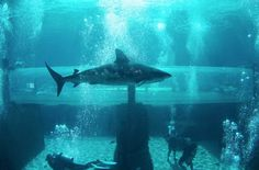 EstiloDF » Da un Salto de Fe hacia un lago de tiburones