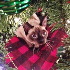 �My god� It�s full of stars.� | 18 Cats Who Are Really, Really Excited About Christmas Trees