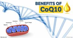 The number of Americans using CoQ10, one of the the most popular supplements for mitochondrial health, increased from an estimated 2 million to 24 million. http://articles.mercola.com/sites/articles/archive/2016/10/31/coq10-ubiquinol-mitochondrial-health.aspx