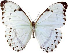 white butterfly wallpaper ile ilgili görsel sonucu