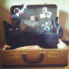 Catsparella: DIY Vintage Suitcase Cat Bed
