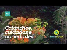 Calanchoe, cuidados e variedades #63 - YouTube