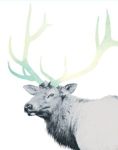 Modern Elk with Ombre Mint Watercolor Antlers by Kate Moore Creative