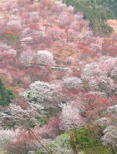 Yoshinoyama in Nara, Japan