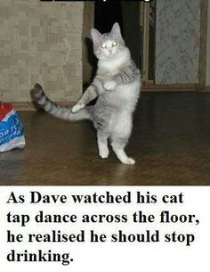 tap dancing cat