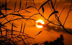 Bokeh sunset and tree branches  #Bokeh #sunset #tree #sun #photography