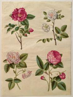 Rosa Rosae: Johannes Simon Holtzbecher (1610/20-1671) -  Gottor...