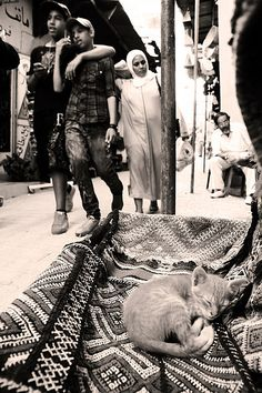 Morocco, friends ... and sleeping cat :) <3