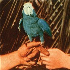 Shazamを使ってAndrew BirdのRoma Fadeを発見しました http://shz.am/t310278428