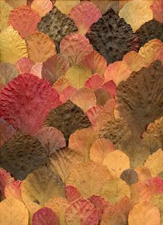leaves- love it