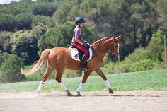 HE324711E - Pony D bien domado para doma clásica en venta en Cataluña :: Venta de Caballos