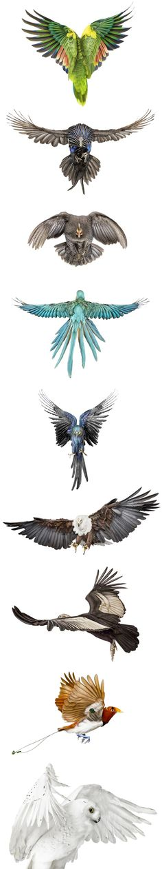 Birds in flight Andrew Zuckerman Crazy Bird, Big Bird, Small Birds, Colorful Birds, Pet Birds, Blue Gold Macaw, Bird Wings, Bird Illustration, Mundo Animal