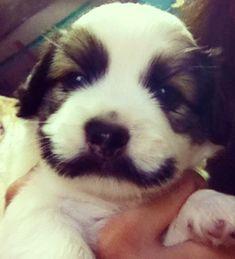 puppy mustache