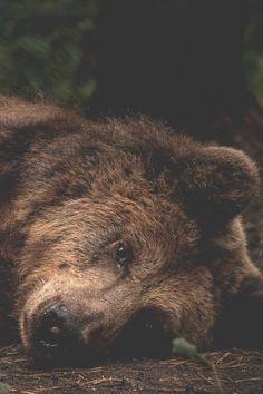 Sweet sleepy bear. #SicEm