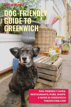 25 Best Dog-friendly Restaurants in London images in 2019 | Dog
