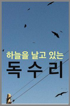 1월 11일 고성 철성중학교 뒤쪽에서 400여마리의 독수리를 만났다.